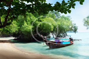 bigstock-tree-in-water-and-long-boats-o-28701590